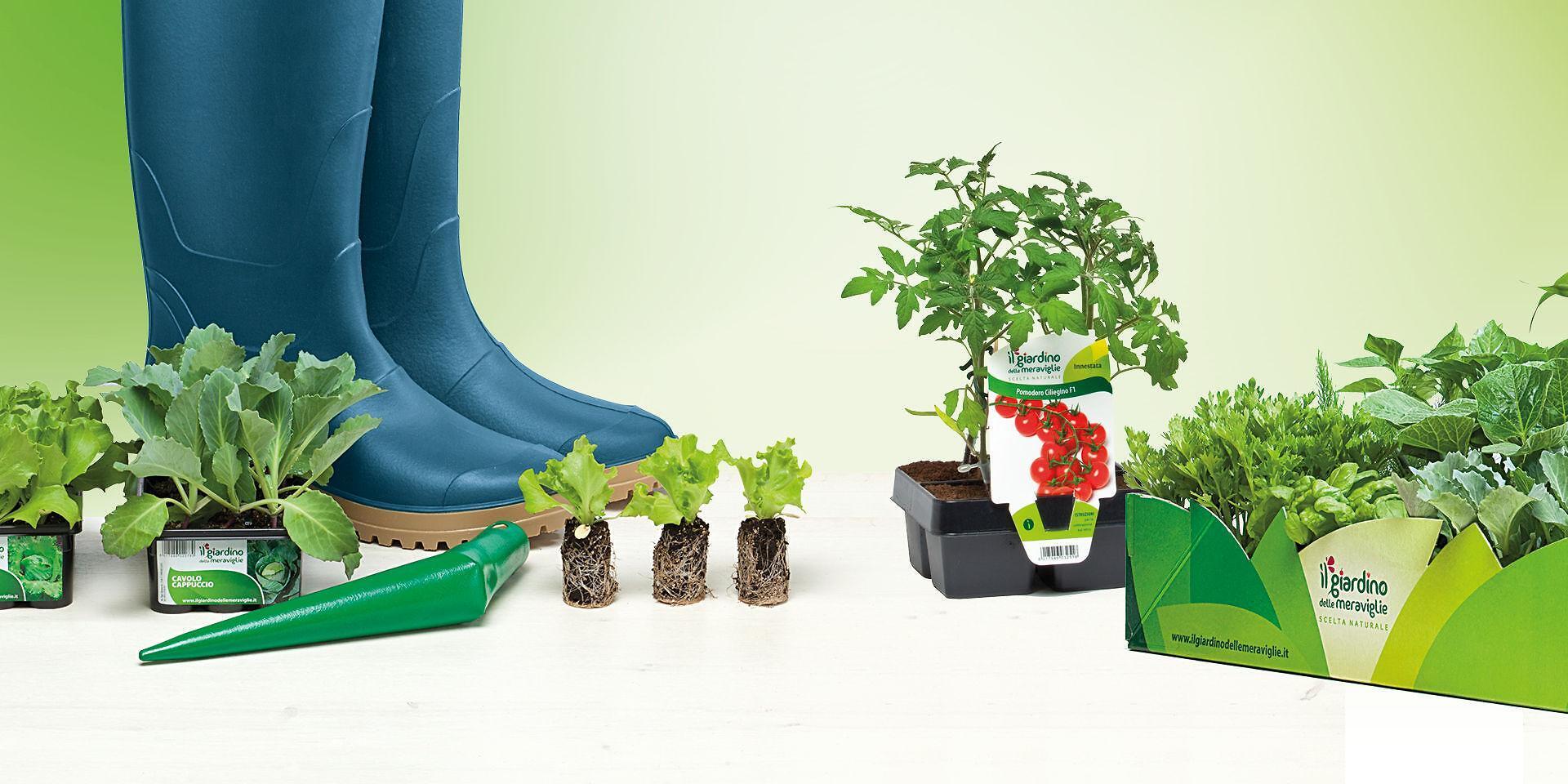 Piante Rustiche Da Balcone piante selezionate per orto e giardino