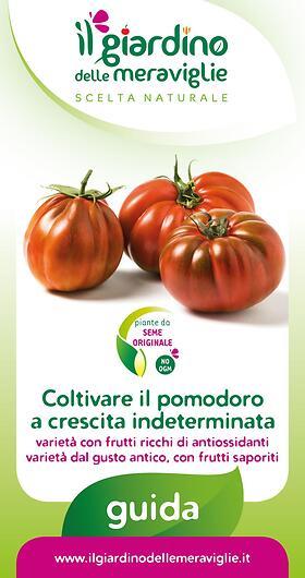 Coltivare il pomodoro a crescita indeterminata varietà con frutti ricchi di antiossidanti varieta dal gusto antico, con frutti saporiti