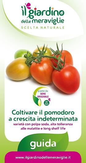 Coltivare il pomodoro a crescita indeterminata varieta con polpa soda, alta tolleranza alle malattie e long shelf life