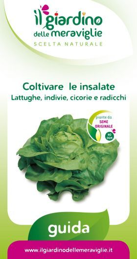 Coltivare le insalate: lattughe, indivie, cicorie e radicchi