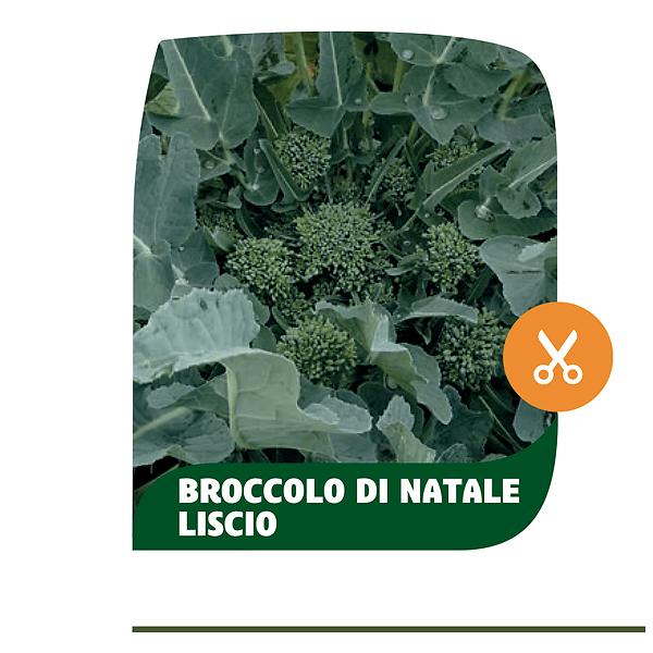 Broccolo di Natale liscio Casertano