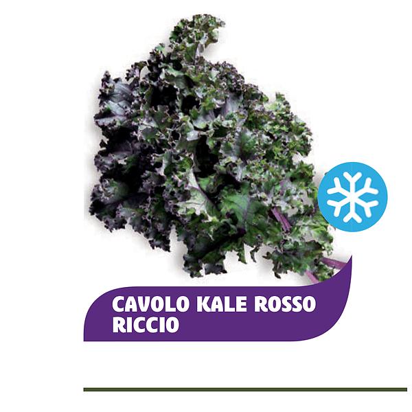 Cavolo Kale rosso riccio