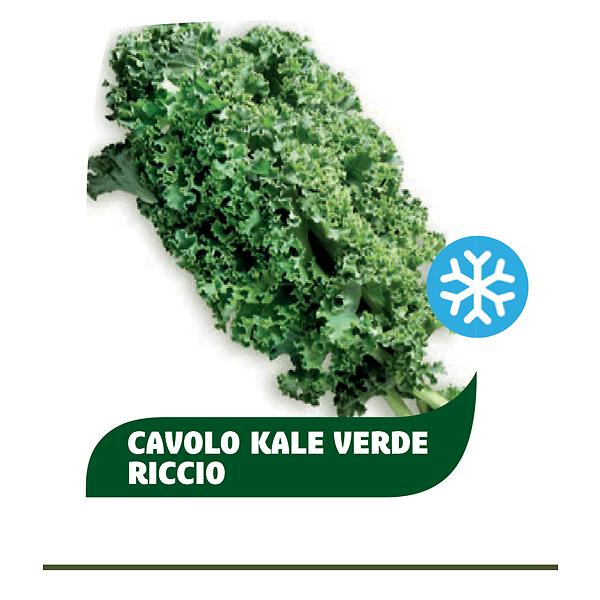 Cavolo Kale verde riccio