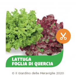 Lattuga Quercia mix