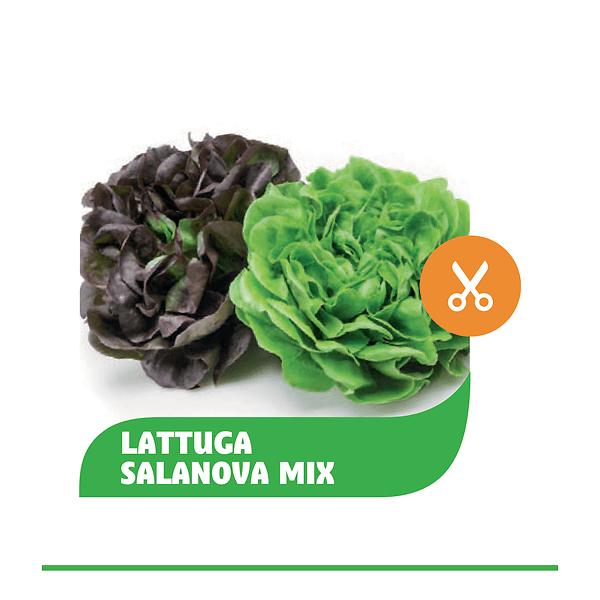 Salanova Mix Foglia Liscia