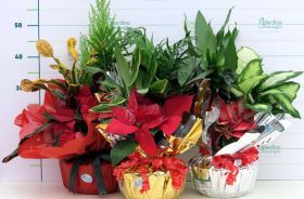 Composizioni piante da Regalo