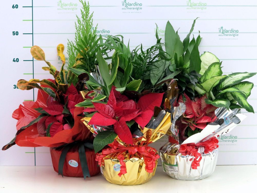 Composizione piante in confezione regalo for Piante da frutto a 1000 metri