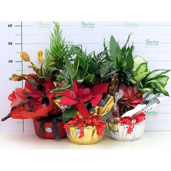 Composizione piante in Confezione Regalo