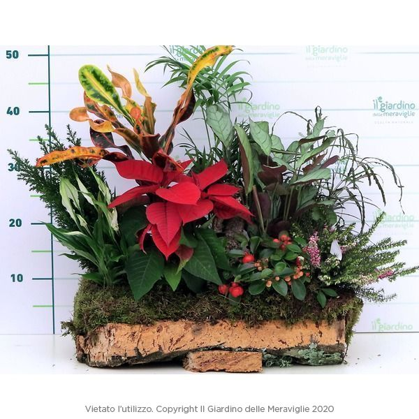 Composizioni piante in Sughero