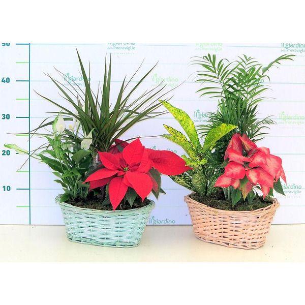 Composizione piante balconetta in vimini