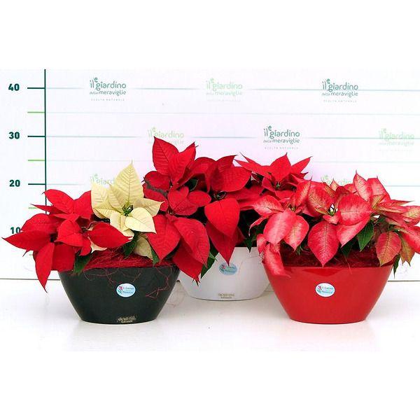 Composizione piante in vaso oval