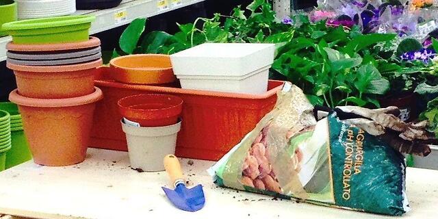 rinvaso piante e fiori