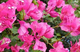 Piante e arbusti da fiore
