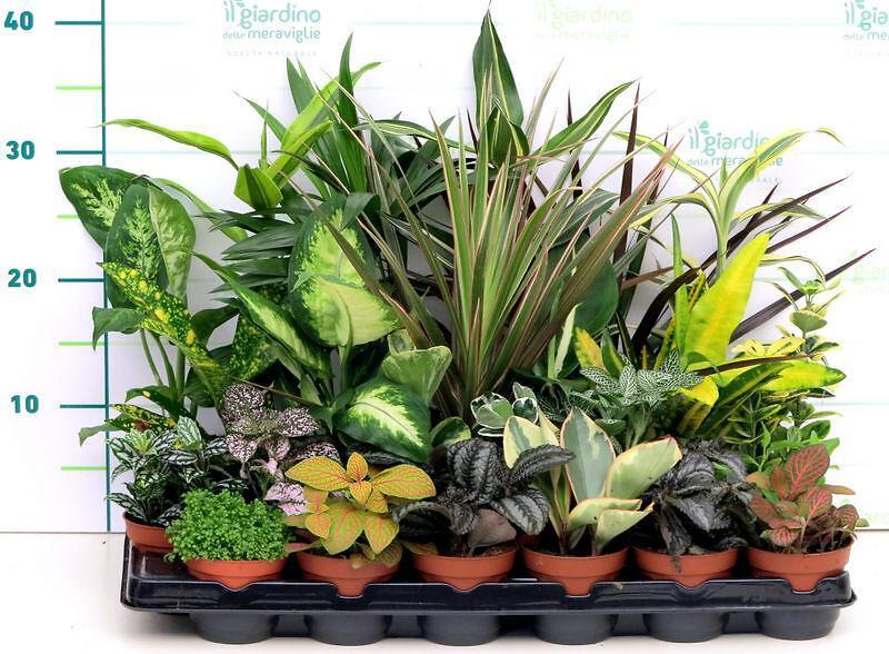 Piante verdi miste for Piante da interno alte