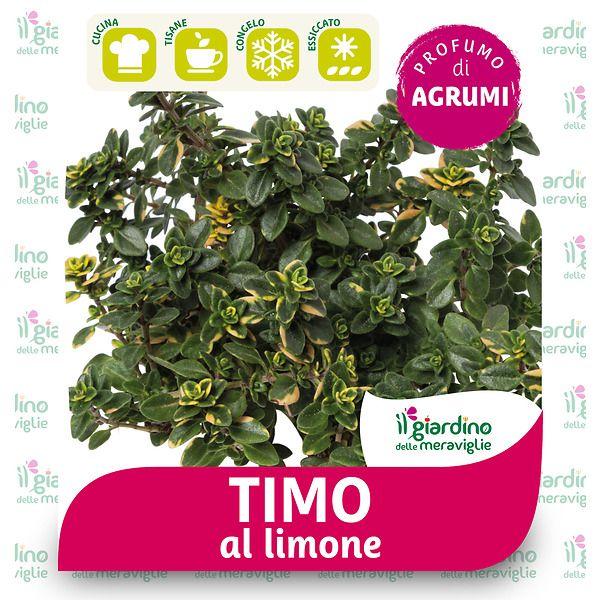Timo limone