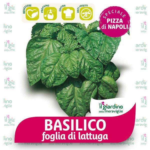 Basilico foglia di lattuga