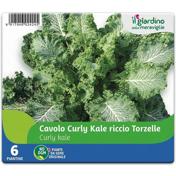 Cavolo curly Kale riccio Torzelle