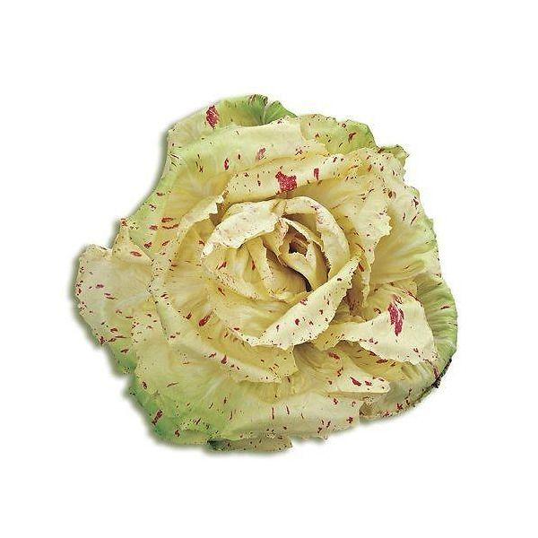 Radicchio variegato di Castelfranco