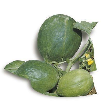 Melone Carosello