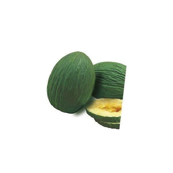 Melone verde tendral innestato