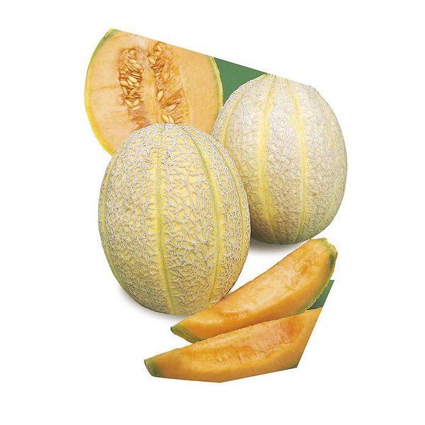 Melone retato degli ortolani innestato