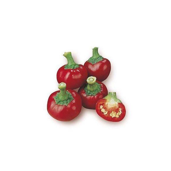 Peperone piccante coccinella