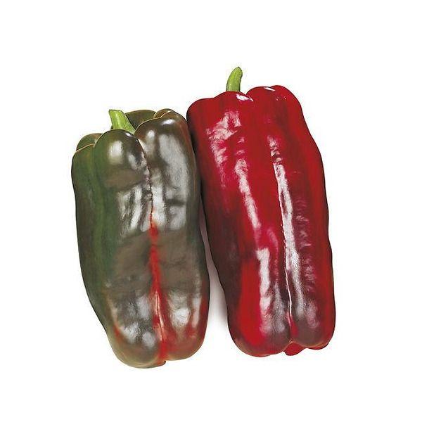 Peperone rosso tip. Lamuyo