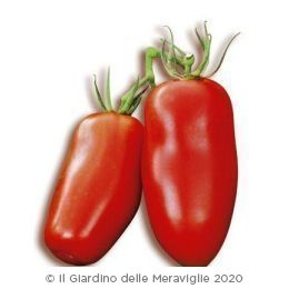 Pomodoro San Marzano nano Or Miss betty