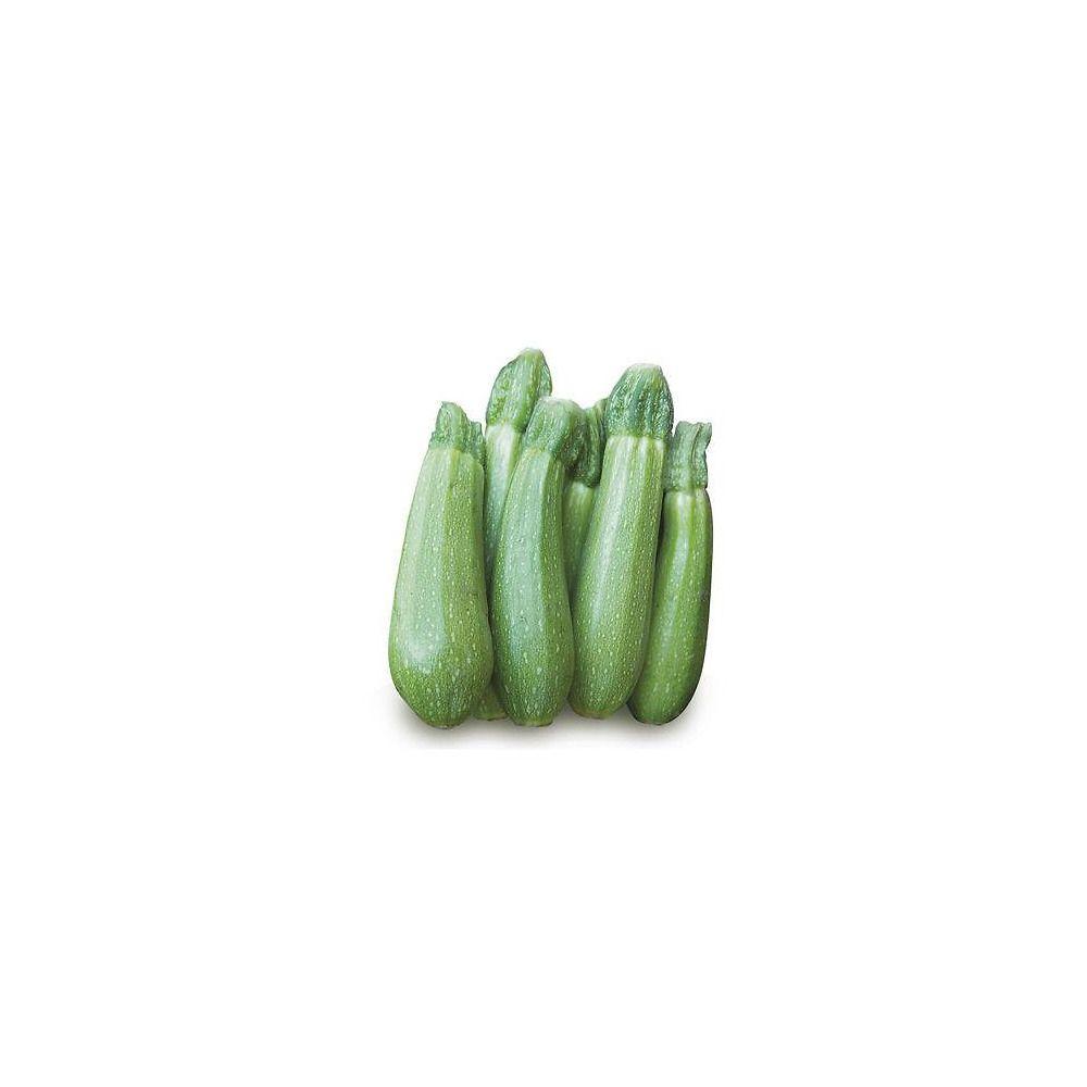 Varietà Zucchine Da Fiore zucchino clarita
