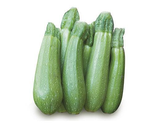 Produzione piante zucchino clarita for Melanzane innestate