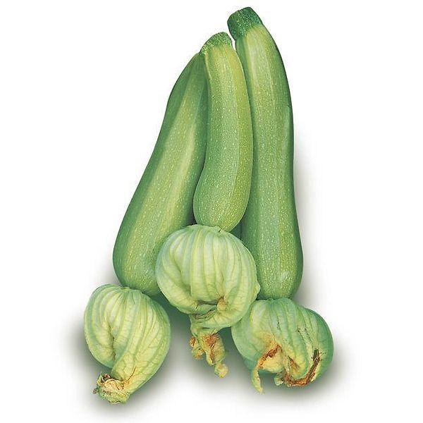 Zucchino verde chiaro tollerante virus