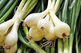 Cipolle, Aglio e Porri