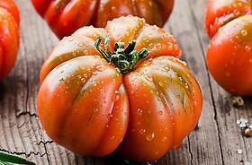 Pomodori a crescita determinata (nane)