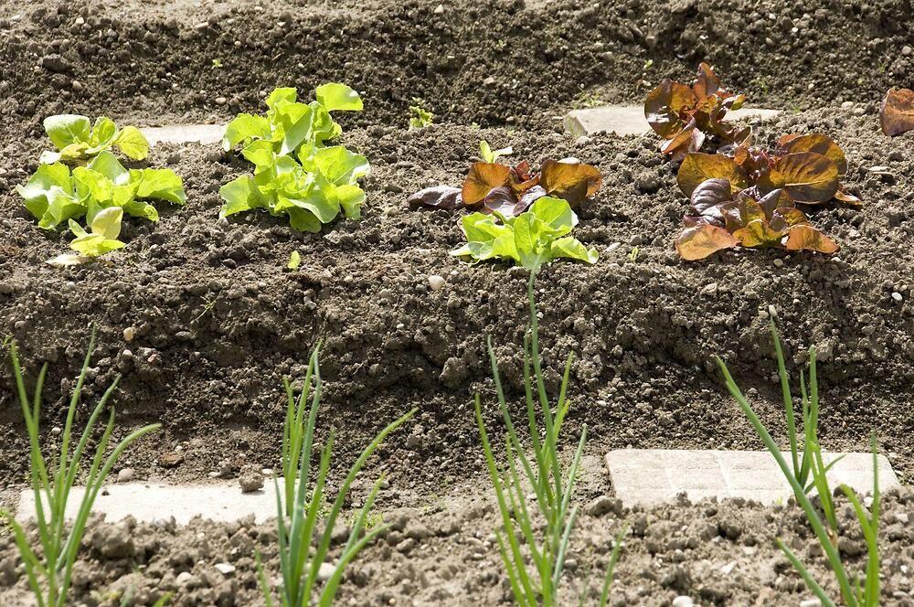 Consigli come trapiantare e curare le vostre piante da - Calendario trattamenti piante da frutto ...