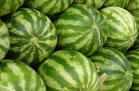 Anguria, Melone innestato