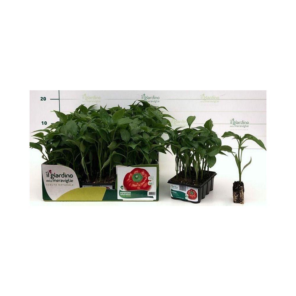 Avversità Delle Piante Coltivate peperone topepo rosso