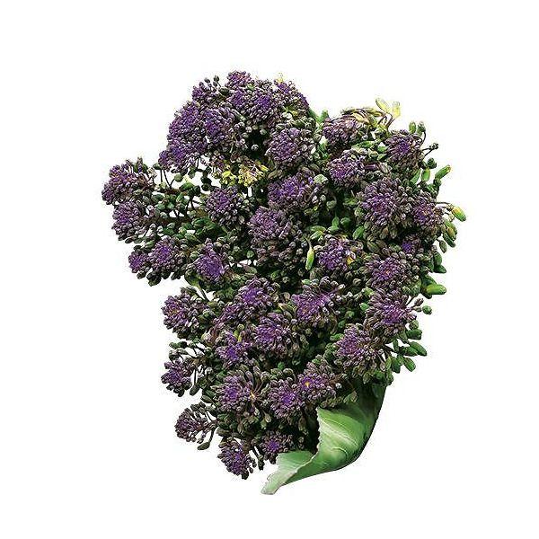 Broccoletto a getti viola Santee