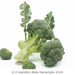 Cavolo broccolo da ricacci 75gg tip.Green Belt