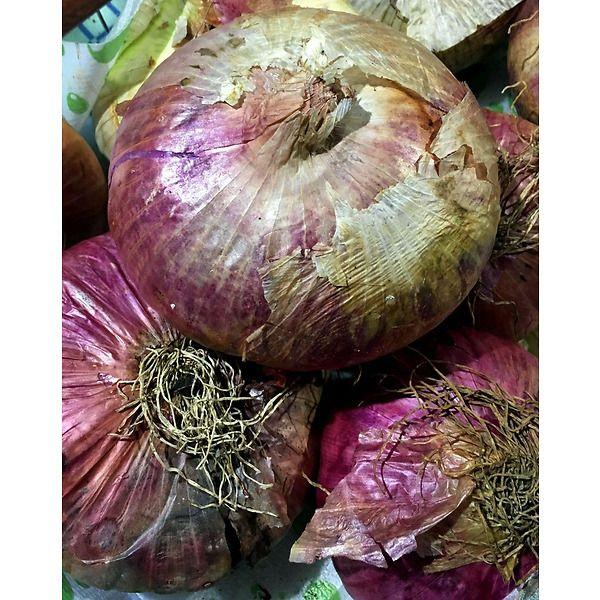 Cipolla rossa piatta di Sicilia