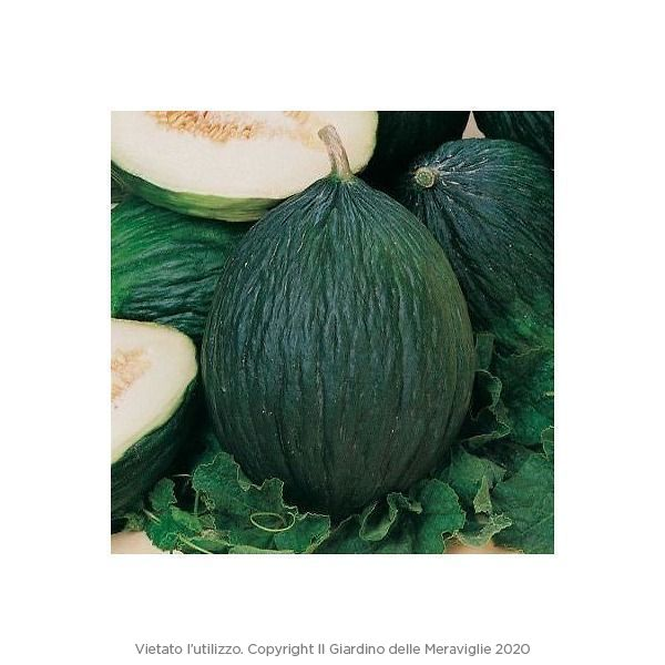 Melone verde Tendral