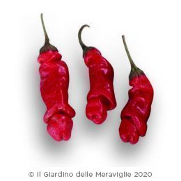 Peperoncino piccante Peter Red Pepper