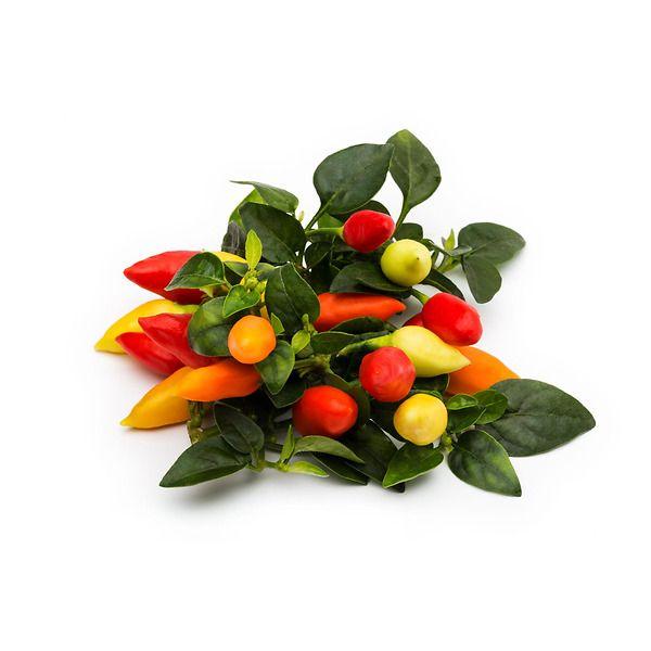 Peperoncino piccante ornamentale Mechico