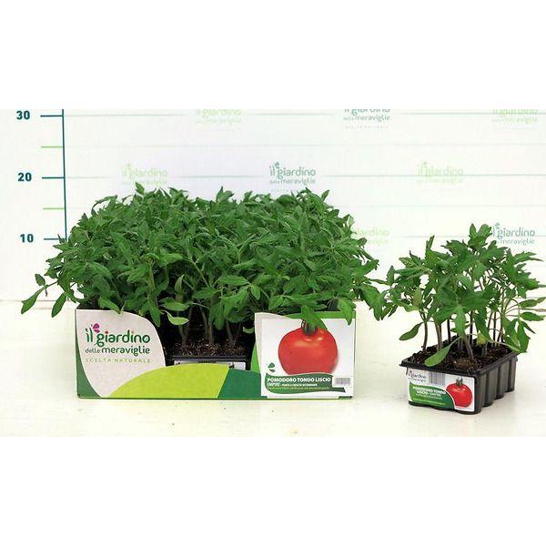 pomodoro empire tondo liscio il giardino delle meraviglie