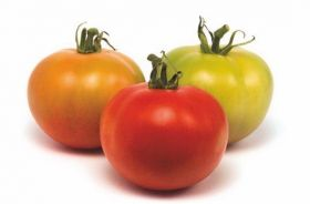 Pomodori da impalare (crescita indeterminata)