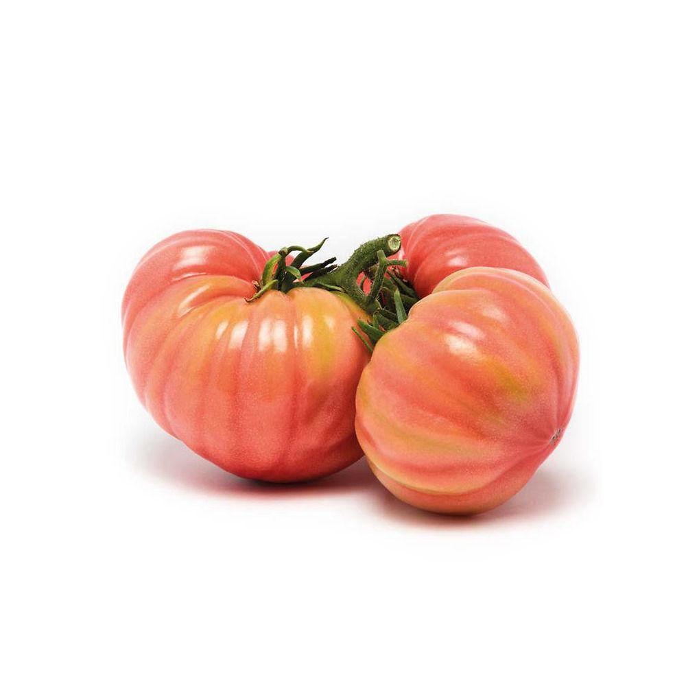 Sostegni Per Pomodori In Vaso pomodoro rosa sorrento