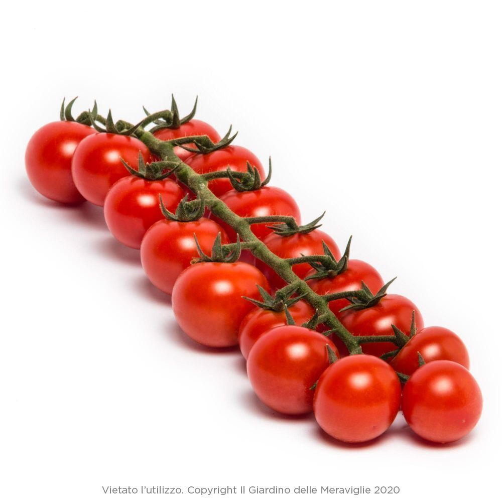 Sostegni Per Pomodori In Vaso pomodoro ciliegino alto