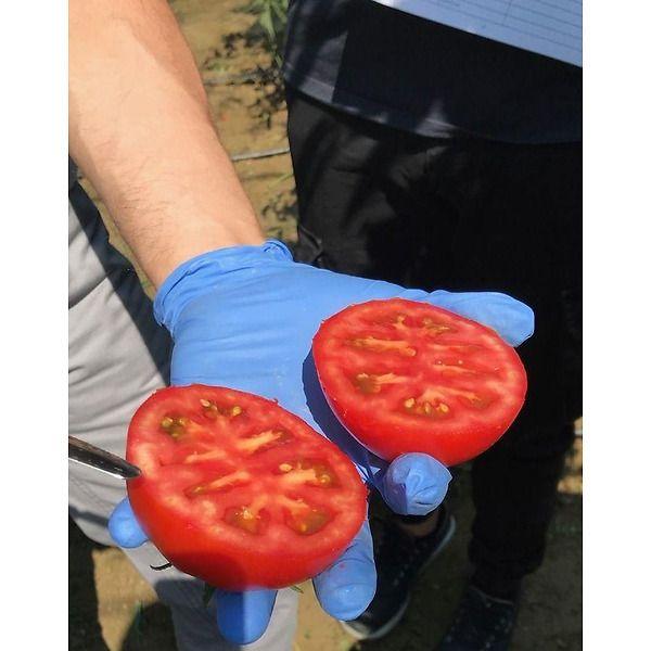 Pomodoro tip. izabella polpa