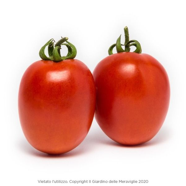 Pomodoro per salsa Rio Grande