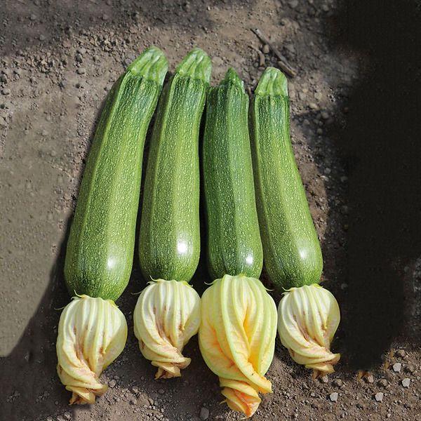 Zucchino San Pasquale