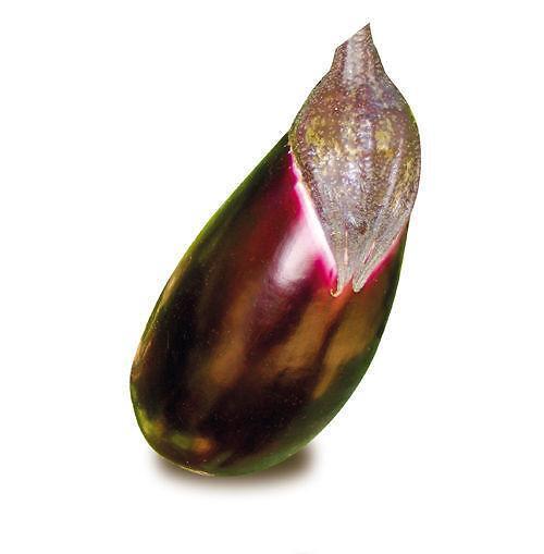 Produzione di melanzana seta innestata for Melanzane innestate
